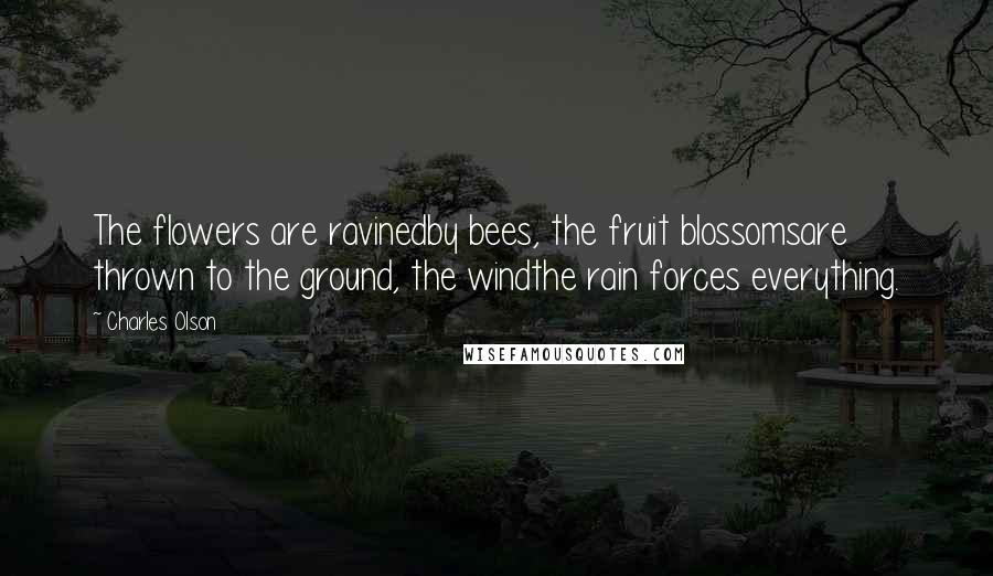 Charles Olson Quotes: The flowers are ravinedby bees, the fruit blossomsare thrown to the ground, the windthe rain forces everything.