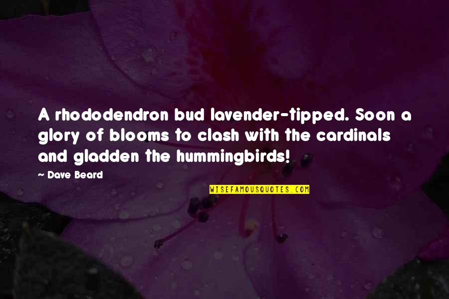A Beard Quotes By Dave Beard: A rhododendron bud lavender-tipped. Soon a glory of
