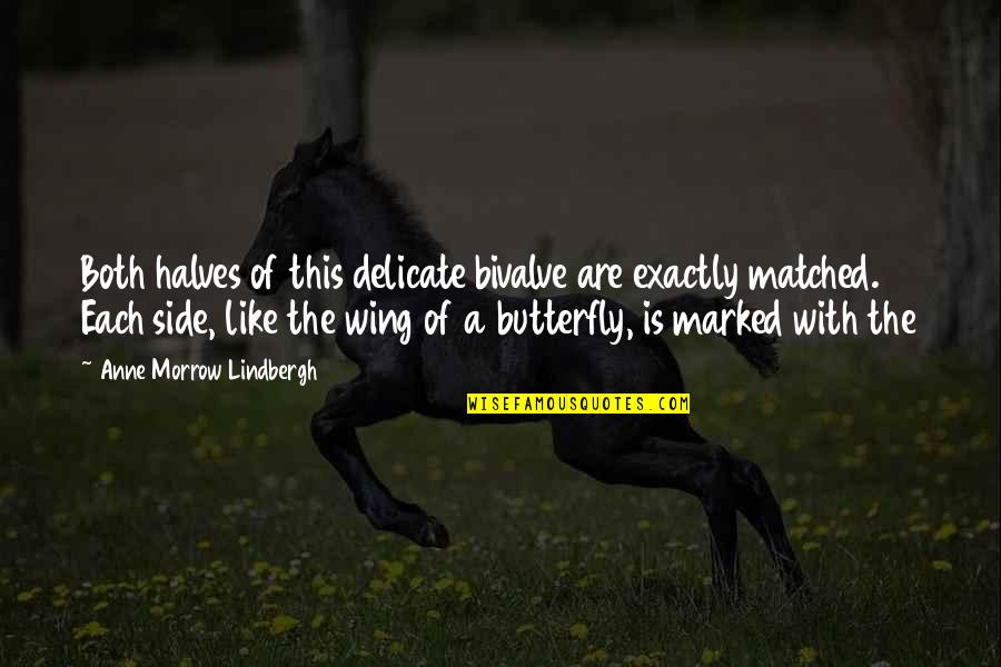 A Butterfly Quotes By Anne Morrow Lindbergh: Both halves of this delicate bivalve are exactly