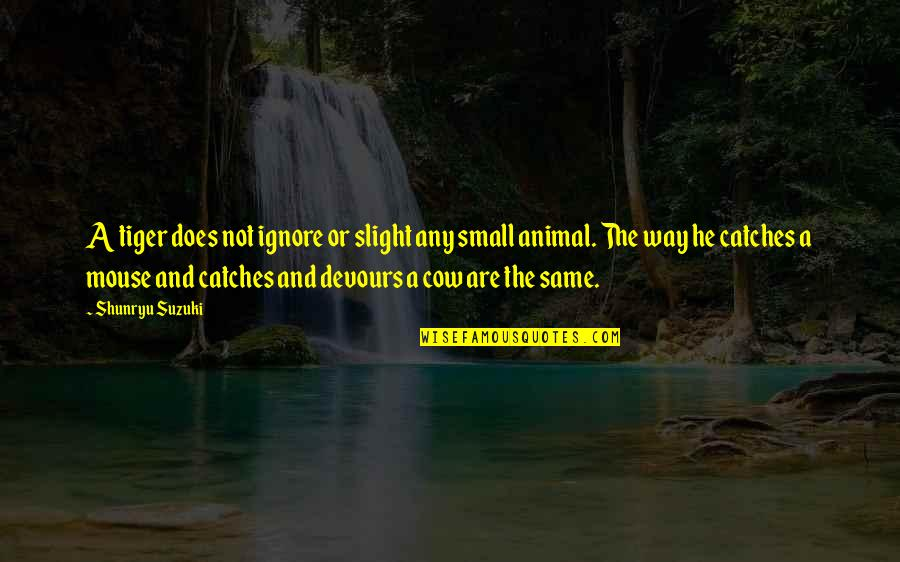A Cow Quotes By Shunryu Suzuki: A tiger does not ignore or slight any