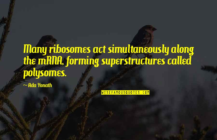 Ada Yonath Quotes By Ada Yonath: Many ribosomes act simultaneously along the mRNA, forming