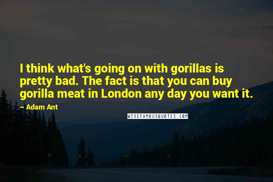 Adam Ant quotes: I think what's going on with gorillas is pretty bad. The fact is that you can buy gorilla meat in London any day you want it.