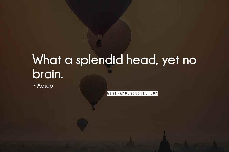 Aesop quotes: What a splendid head, yet no brain.