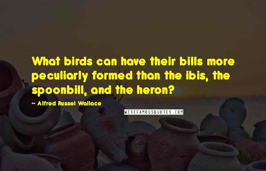 Alfred Russel Wallace quotes: What birds can have their bills more peculiarly formed than the ibis, the spoonbill, and the heron?