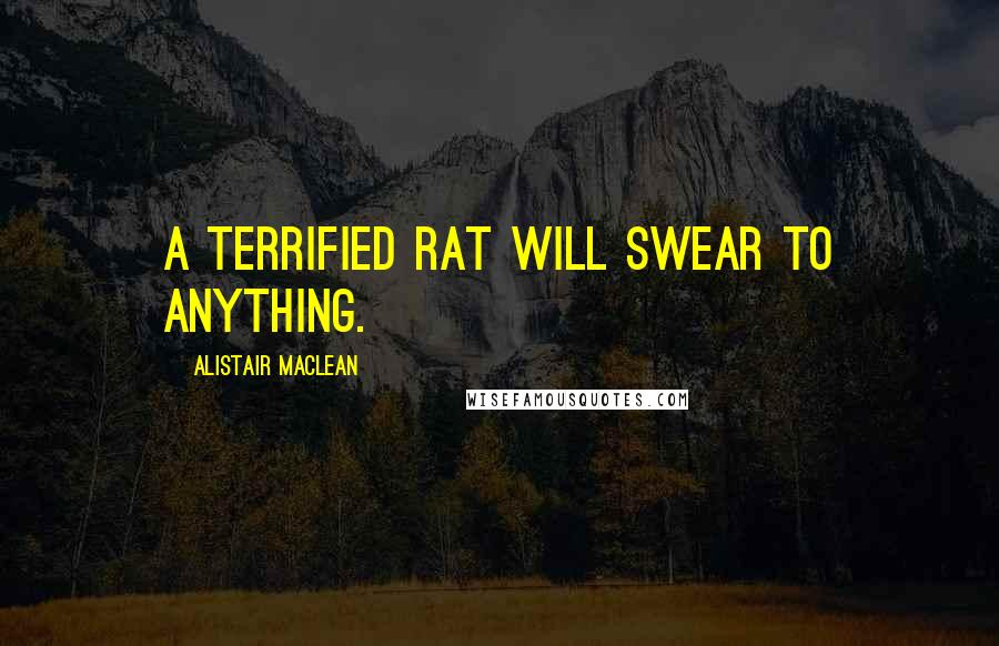 Alistair MacLean quotes: A terrified rat will swear to anything.