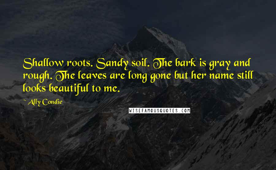 Ally Condie quotes: Shallow roots. Sandy soil. The bark is gray and rough. The leaves are long gone but her name still looks beautiful to me.