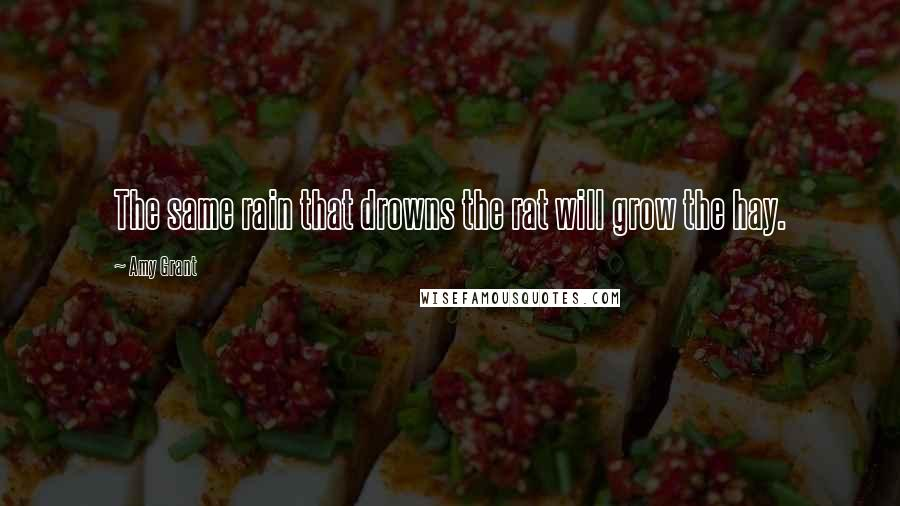 Amy Grant quotes: The same rain that drowns the rat will grow the hay.