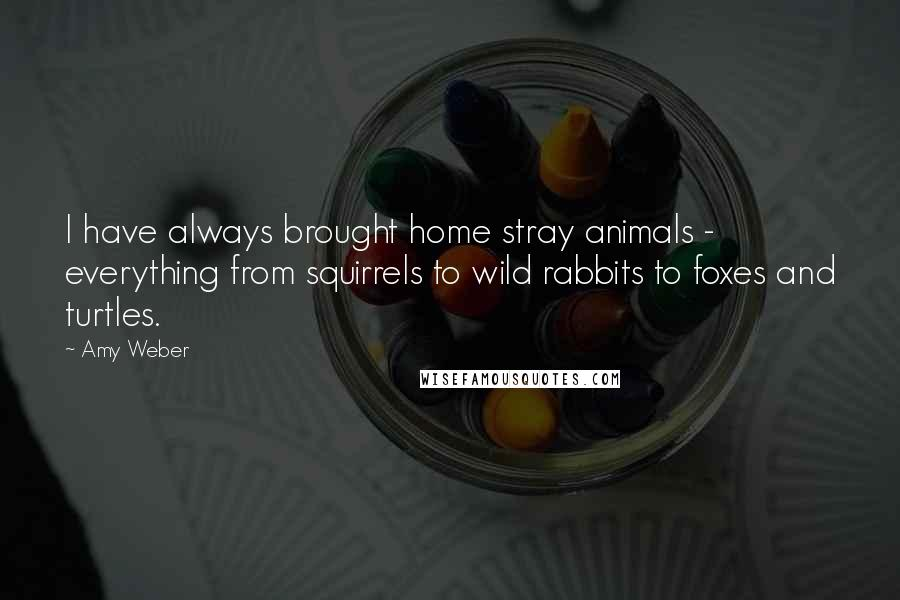 Amy Weber quotes: I have always brought home stray animals - everything from squirrels to wild rabbits to foxes and turtles.