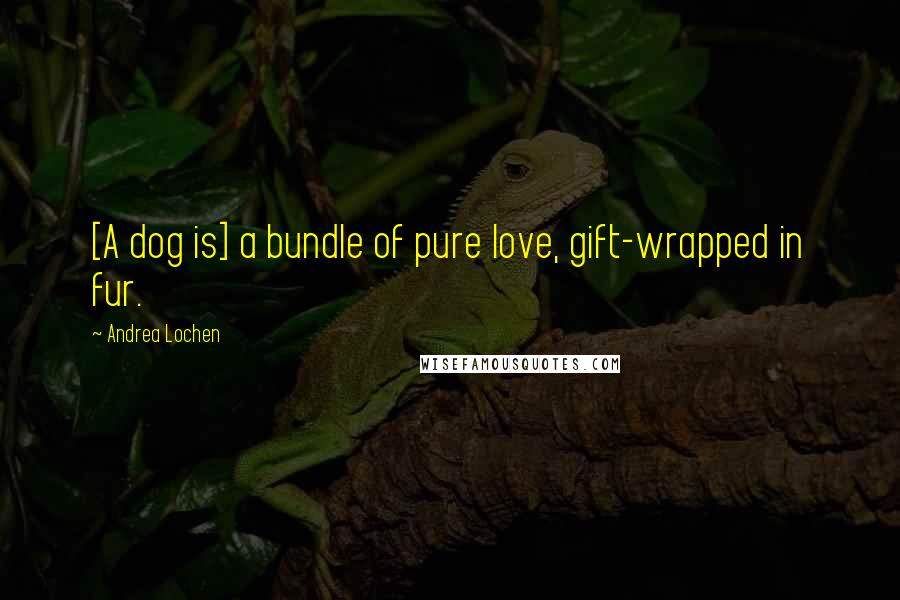 Andrea Lochen quotes: [A dog is] a bundle of pure love, gift-wrapped in fur.