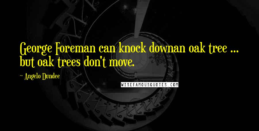 Angelo Dundee quotes: George Foreman can knock downan oak tree ... but oak trees don't move.