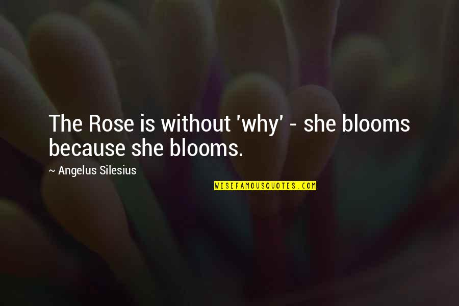 Angelus Quotes By Angelus Silesius: The Rose is without 'why' - she blooms
