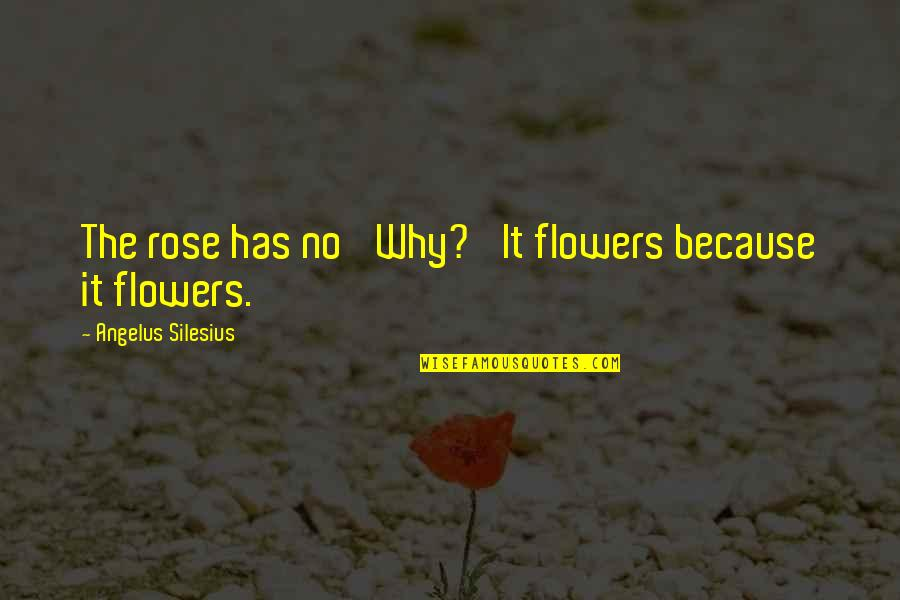 Angelus Quotes By Angelus Silesius: The rose has no 'Why?' It flowers because