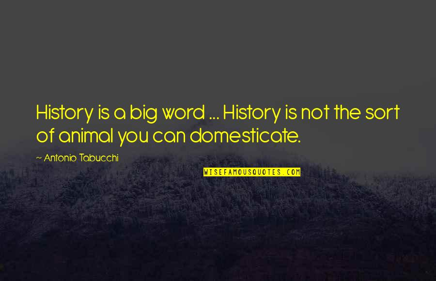 Animal Quotes By Antonio Tabucchi: History is a big word ... History is
