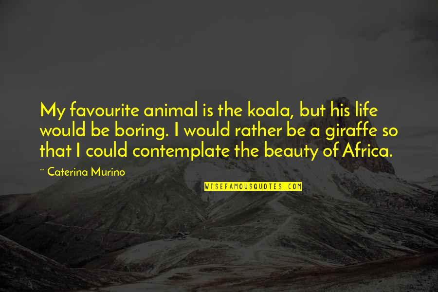 Animal Quotes By Caterina Murino: My favourite animal is the koala, but his
