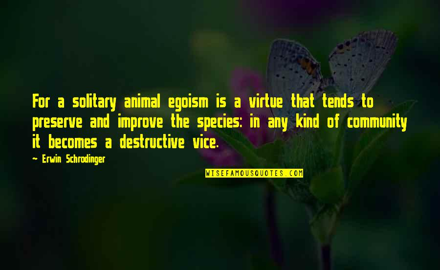 Animal Quotes By Erwin Schrodinger: For a solitary animal egoism is a virtue