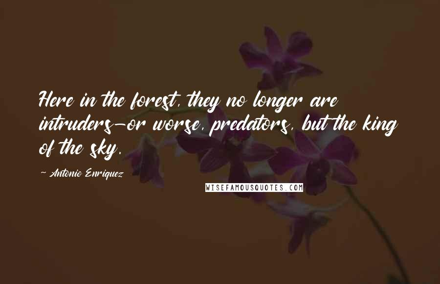 Antonio Enriquez quotes: Here in the forest, they no longer are intruders-or worse, predators, but the king of the sky.
