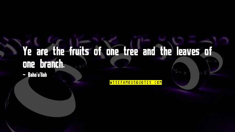 Baha'is Quotes By Baha'u'llah: Ye are the fruits of one tree and