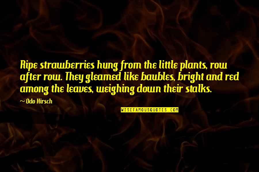 Baubles Quotes By Odo Hirsch: Ripe strawberries hung from the little plants, row