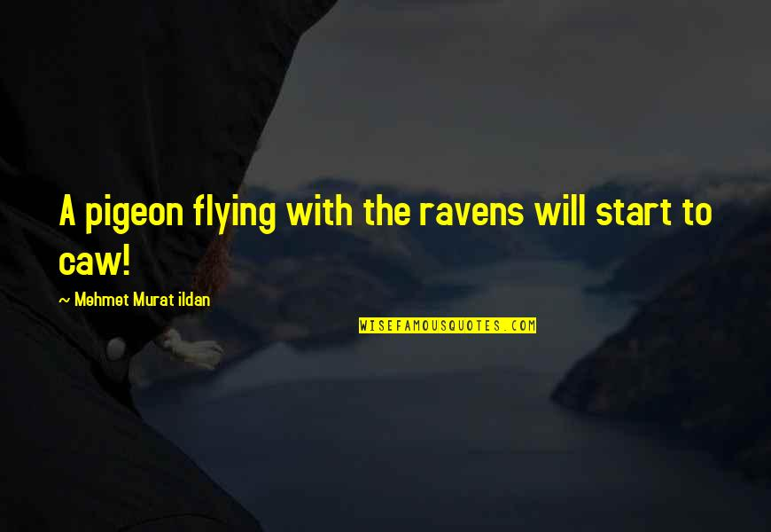 Bazine Quotes By Mehmet Murat Ildan: A pigeon flying with the ravens will start