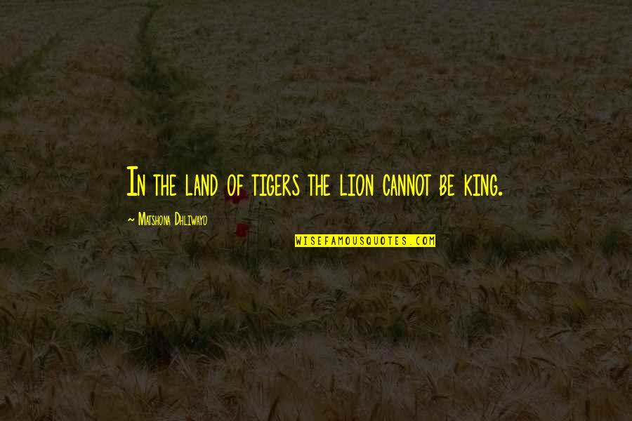 Be Lion Quotes By Matshona Dhliwayo: In the land of tigers the lion cannot