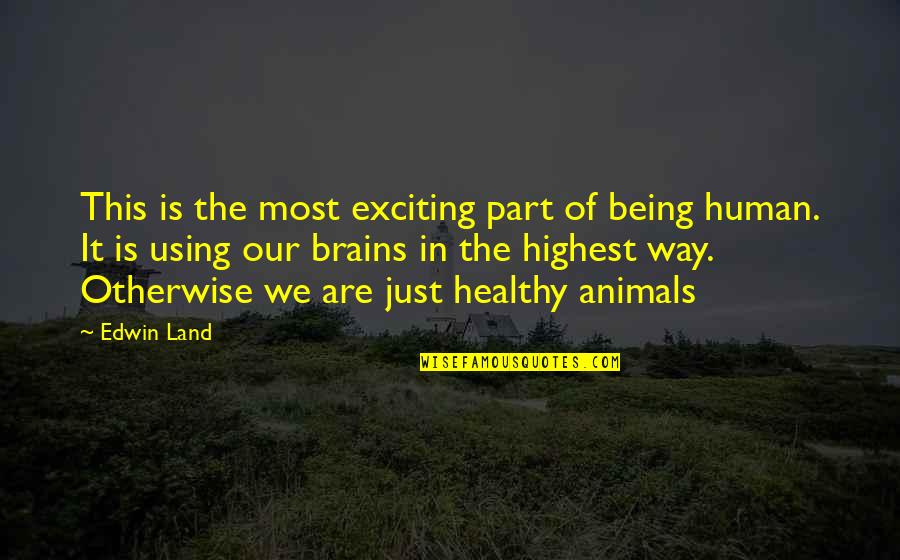 Being Human To Animals Quotes By Edwin Land: This is the most exciting part of being