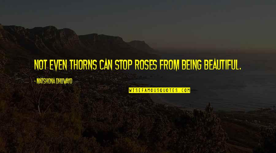 Being Not Beautiful Quotes By Matshona Dhliwayo: Not even thorns can stop roses from being