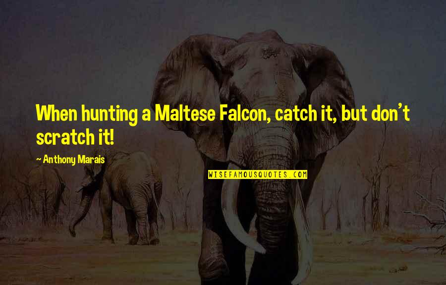 Ben Gazzara Quotes By Anthony Marais: When hunting a Maltese Falcon, catch it, but