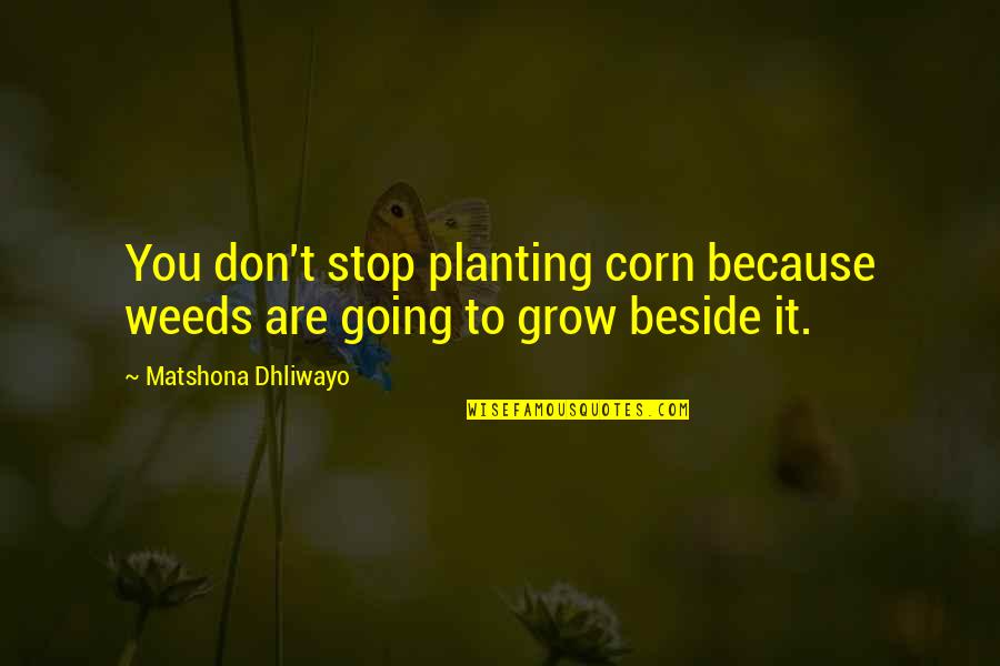 Beside You Quotes By Matshona Dhliwayo: You don't stop planting corn because weeds are