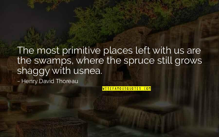 Best Shaggy Quotes By Henry David Thoreau: The most primitive places left with us are