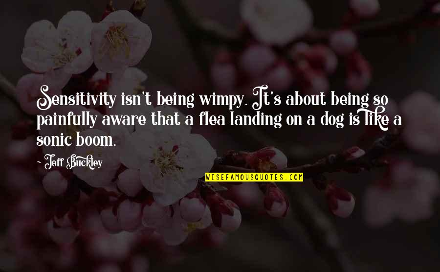 Best Sonic Boom Quotes By Jeff Buckley: Sensitivity isn't being wimpy. It's about being so