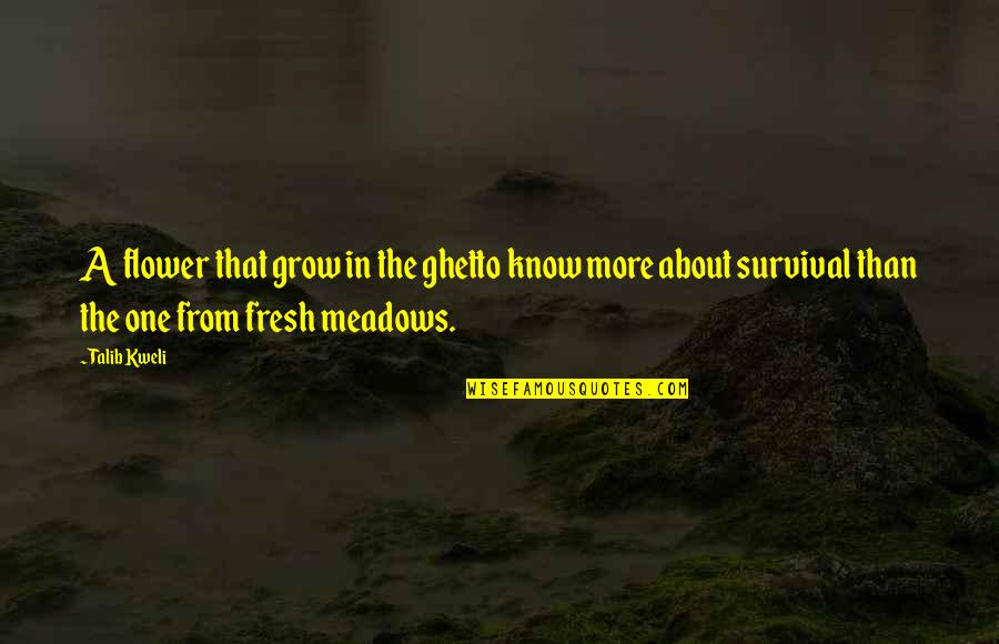 Best Talib Kweli Quotes By Talib Kweli: A flower that grow in the ghetto know