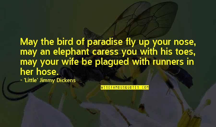 Bird Of Paradise Quotes By 'Little' Jimmy Dickens: May the bird of paradise fly up your