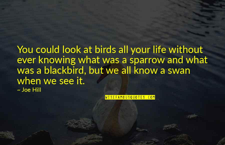 Birds And Life Quotes By Joe Hill: You could look at birds all your life