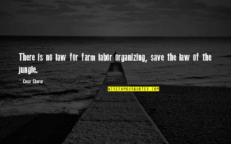 Blitzer's Quotes By Cesar Chavez: There is no law for farm labor organizing,