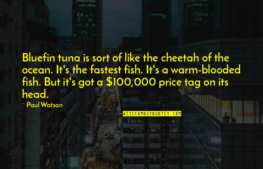 Bluefin Quotes By Paul Watson: Bluefin tuna is sort of like the cheetah