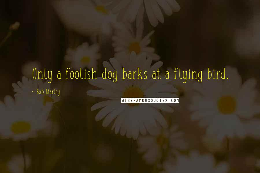 Bob Marley quotes: Only a foolish dog barks at a flying bird.