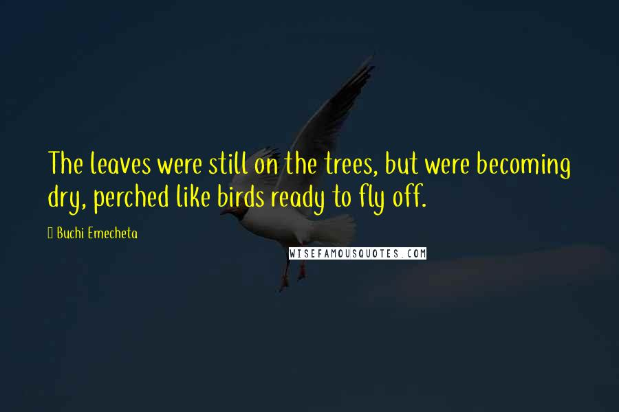 Buchi Emecheta quotes: The leaves were still on the trees, but were becoming dry, perched like birds ready to fly off.