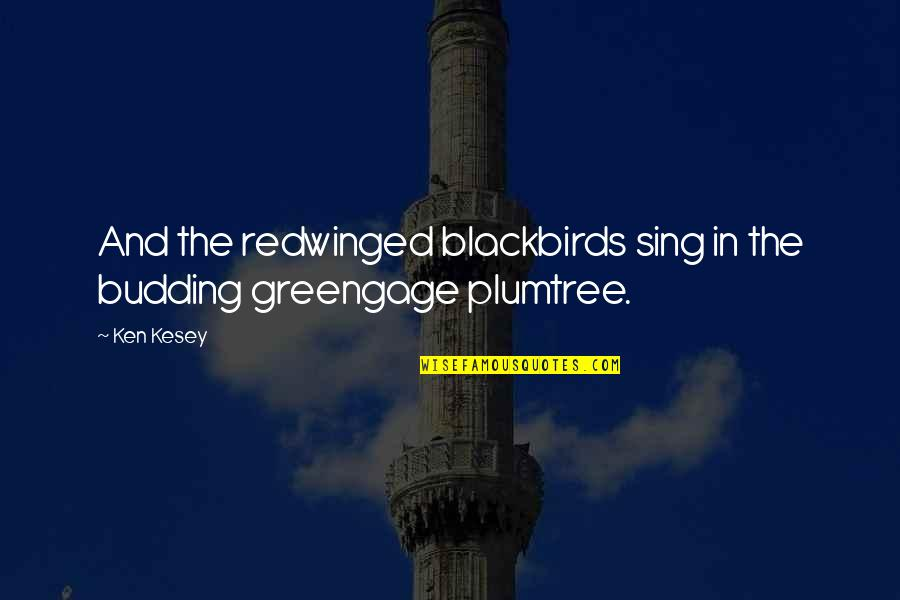 Budding Quotes By Ken Kesey: And the redwinged blackbirds sing in the budding
