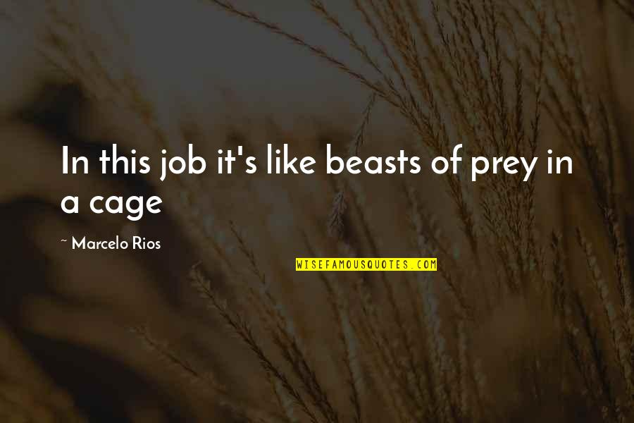 Cage Quotes By Marcelo Rios: In this job it's like beasts of prey