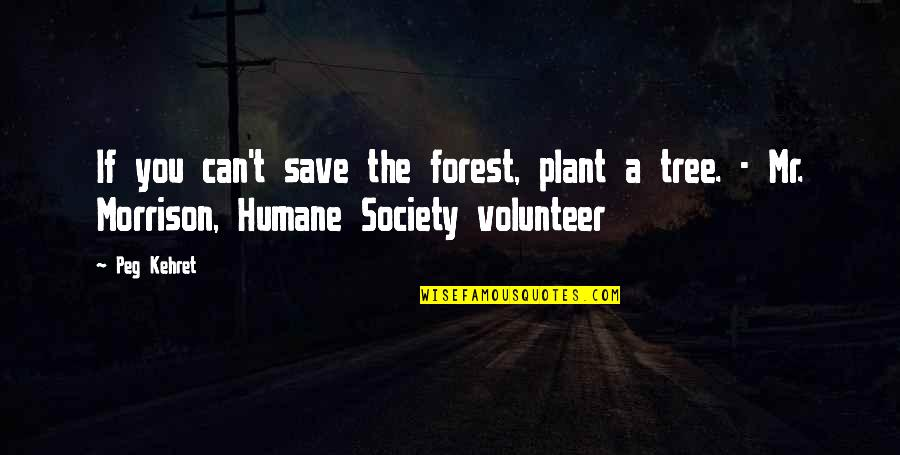 Can't Save You Quotes By Peg Kehret: If you can't save the forest, plant a
