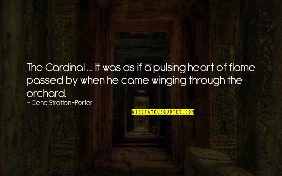 Cardinal Quotes By Gene Stratton-Porter: The Cardinal ... It was as if a