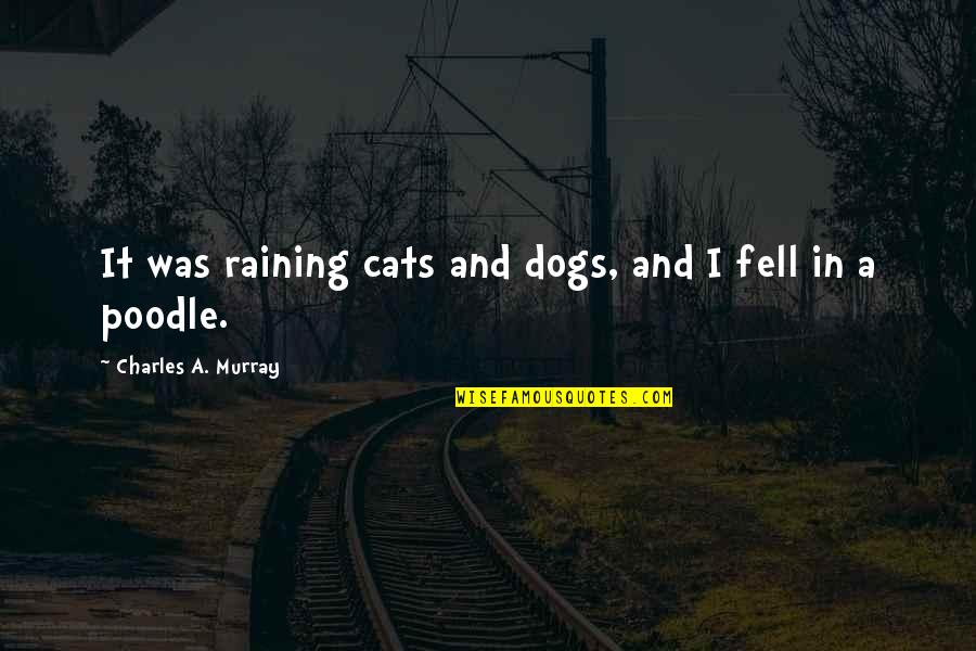 Cat In The Rain Quotes By Charles A. Murray: It was raining cats and dogs, and I