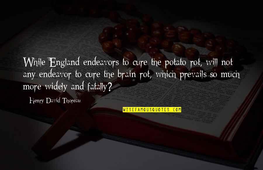 Cavalryman's Quotes By Henry David Thoreau: While England endeavors to cure the potato-rot, will