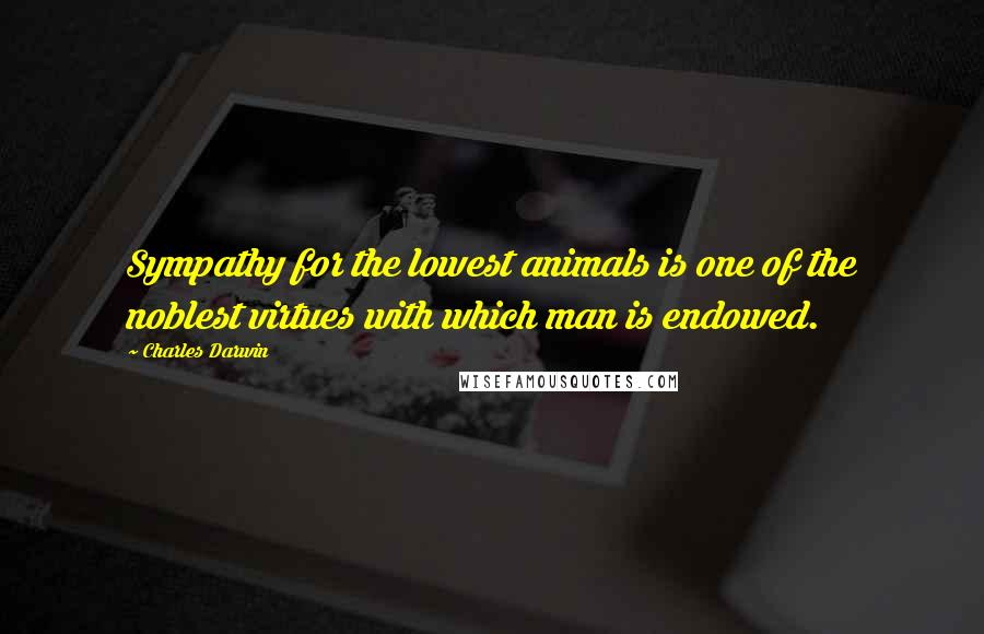 Charles Darwin quotes: Sympathy for the lowest animals is one of the noblest virtues with which man is endowed.