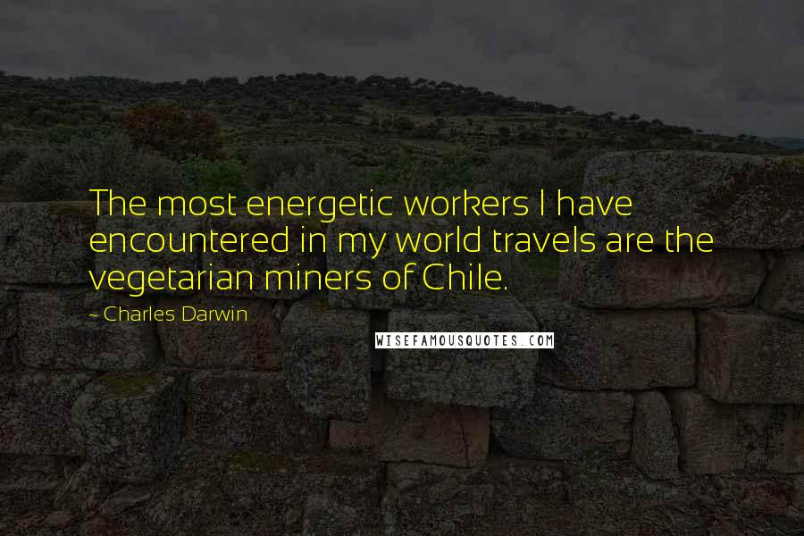 Charles Darwin quotes: The most energetic workers I have encountered in my world travels are the vegetarian miners of Chile.