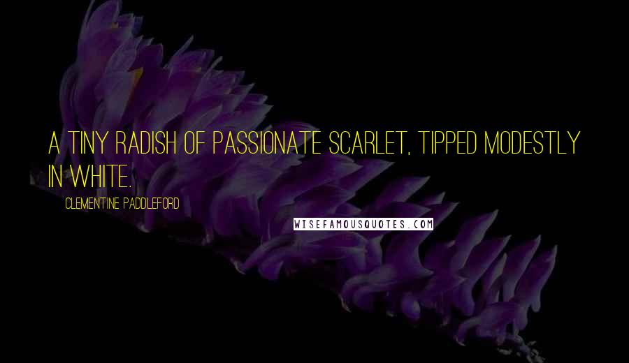 Clementine Paddleford quotes: A tiny radish of passionate scarlet, tipped modestly in white.