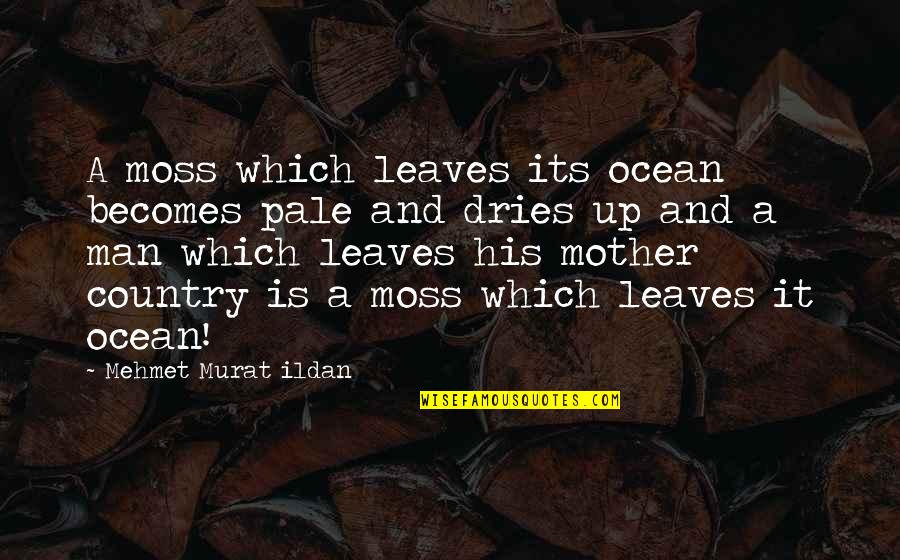 Coffee Made My Day Quotes By Mehmet Murat Ildan: A moss which leaves its ocean becomes pale