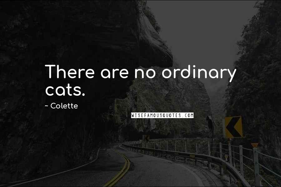 Colette quotes: There are no ordinary cats.