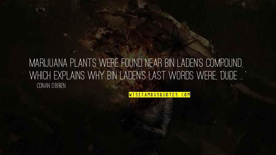 Conan O'brien Quotes By Conan O'Brien: Marijuana plants were found near bin Laden's compound,