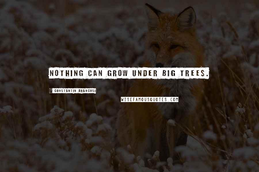 Constantin Brancusi quotes: Nothing can grow under big trees.